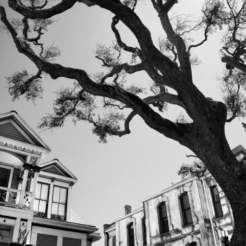 In #Galveston. #blackandwhite #tree #buildings (Taken with instagram)