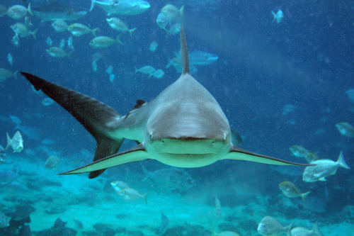 shark-ray:  hi
