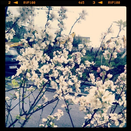 Here comes the SPRING!! (Taken with instagram)