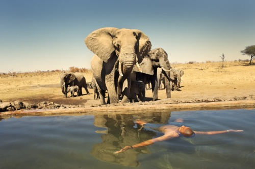 Håkan Ludwigson - new images from Botswana safari.