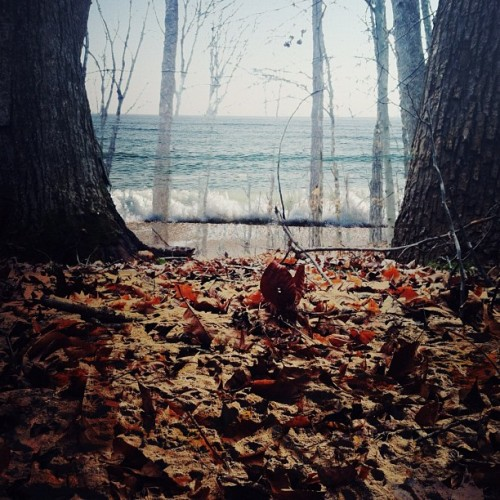 through the trees / into the water. (Taken with instagram)