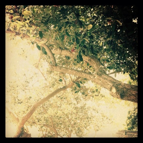 Just a nice photo of #trees! (Taken with instagram)