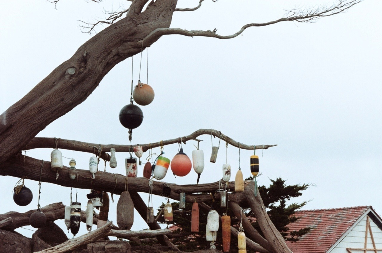 buoy tree Crescent City, CA; Nikon F3HP; Kodak Portra 160NC Pacific Coasting