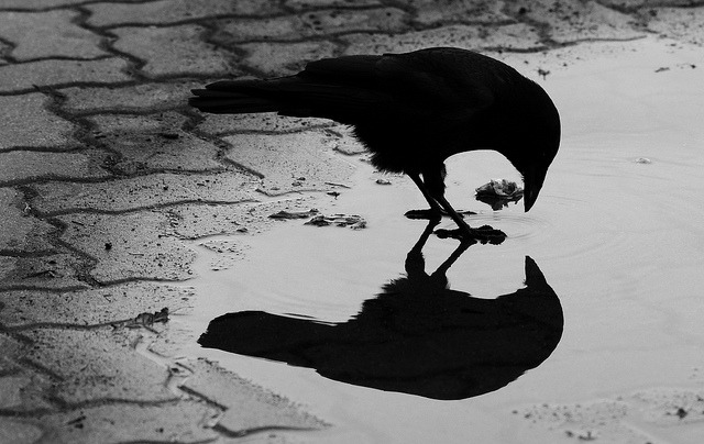 Good morning everyone…