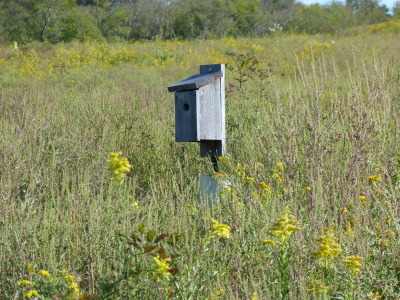 mostlybirds:  Lonely little birdhouse in a field, Bells Bend Park, Nashville.