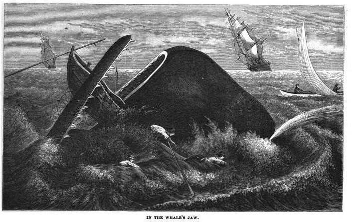 From William M Davis (1874) Nimrod of the sea: or, the American whaleman