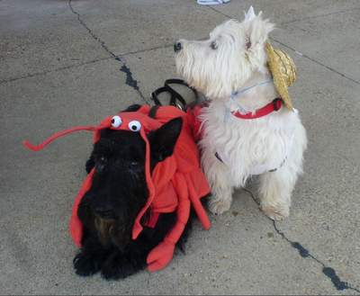 everyonelovesaterrier:  Farmer and the crab.