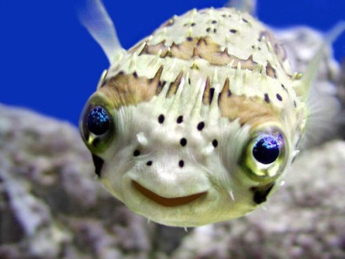 kennytothedee:  Cute lil fish.
