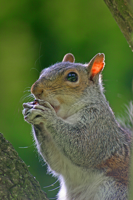 squirrel nutkin takes up the blues harmonica on Flickr.Goodnight, tumblrtown. About time I vainly tried to get to sleep… again