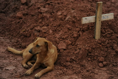 "politics-war:  A dog named ""Lion"" guards its owner grave who was a victim of the floods in Rio de Janeiro January 19, 2011."