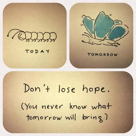 butterfly catterpillar today tomorrow hope stay strong