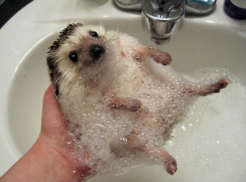 themuffinbandit:  Bath Time   This was my wallpaper for the longest time