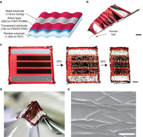 8bitfuture:  New flexible solar cells are thinner than spider silk. Austrian scientists have developed flexible, stretchable solar cells on thin plastic foil substrates, able to generate a record 10 watts per gram. The cells have a 4.2% power conversion efficiency, which puts it ahead of this flexible solar system I covered earlier this week. Typical solar panels have around 12-17% efficiency. The above image shows the cells being wrapped around a human hair only 70 microns wide. The cells are based on a commercially available substrate of PET film, with the total device measuring 1.9 microns thick - around a quarter of the thickness of traditional solar cells.  Creative little Aussies