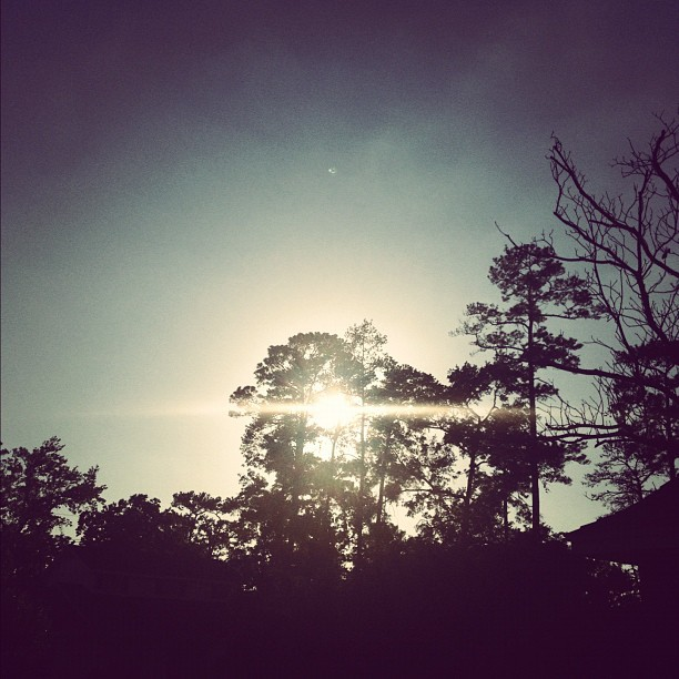 Stare. #sun #shine #trees #black #light #sky #bright #sunshine (Taken with instagram)