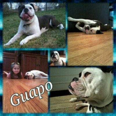 Happy Wednesday! #Guapo #bulldogston #buddies #bff #puppy #dog #friends #kids #collage #canine (Taken with instagram)