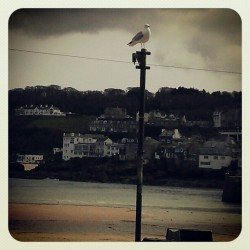 King of the castle (Taken with Instagram at st ives)