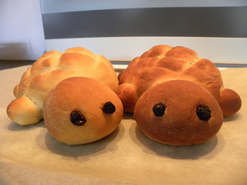cupcake-curiosities:  I love making turtle bread, but it's always kind of sad when you have to cut it. I can never decide if I should go for the head or the tail. I baked a massive loaf today (bottom right picture) but my family ate most of it, I only got two slices :(# edit: By popular demand, I have added the recipe and instructions below: This recipe makes one big one, or you can divide it and make lots of little ones :)400g All purpose flour (plain flour)1 tbsp Quick active dry yeast1 tbsp Sugar (this makes it quite sweet, reduce the sugar by half it you don't want it to be too sweet)1 tsp Salt80 ml Milk1 Medium egg120 ml Water1 tbsp Butter or margarineRaisins or sultanas for the eyes  1.Mix the yeast, sugar, salt and half of the flour in a bowl and put to one side.2. Heat the milk, water and butter in a saucepan until the butter is fully melted, keep stirring whilst you are heating it.3. Pour the liquids into the bowl of dry ingredients and mix in an egg.4. Mix in the rest of the flour gradually until a firm ball of dough forms. (You may not need all the flour or you may need a little extra, just add enough for the dough to be firm and not sticky. I usually use my hands once I start adding the rest of the flour because I find it easier. If you use your hands make sure you have a bowl of warm clean water nearby to rinse them in or you'll end up with dough all over your kitchen and taps!) 5. Sprinkle some flour on your work surface to stop the dough sticking, and knead it until it is firm and springy (This takes about 3-5 minutes).6. Wrap the dough in cling-film and set it aside for 15 minutes.7. Line a baking tray with grease-proof paper.8. Unwrap the dough and separate off parts of it and make a turtle shape on the baking tray (you can use my pictures for size reference, and I would recommend using a butter knife or palette knife to make the patterns on the shell. You need to cut them quite deep because the dough rises and puffs up in the oven).9. Put the tray and turtle in a warm place and leave it to rise for 25 minutes (I have a 2 compartment oven so I usually put the bottom half on a low heat and leave the dough to rise in the top compartment without the heat on).10. Take the turtle out of the warm place you left it (like it's been hibernating >.< ) and re-cut the markings on the shell and insert raisins or sultanas for the eyes. (You need to re-cut the markings to get the best effect after baking).11. Heat the oven to 200 degrees Celsius (400 degrees Fahrenheit).12. Place the tray in the centre of the oven and bake for about 20 minutes (for the large turtle, about 10-15 if you are making a few little ones), or until it is golden brown all over.13. Spend about half an hour agonising over whether or not to start cutting from the head or tail.~ This is particularly good bread to have toasted with heaps of strawberry jam <3I hope you have fun!