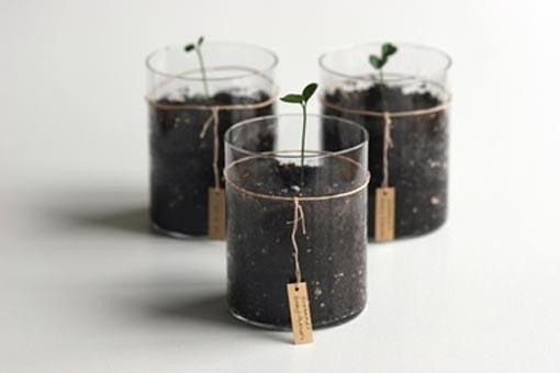 nyaaozawa:  MilkWeed: Spring Greens | Design Milk