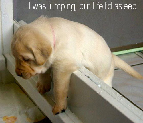When you're a puppy, the world is your napping spot.