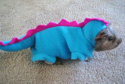 Guinea Pig in a Dinosaur Costume  Fun Fact: The Guinea Pig Dinosaur is neither pig nor dinosaur.