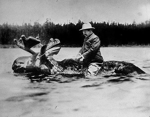 Theodore Roosevelt riding a moose, 1900
