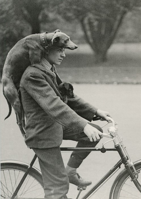 madaboutbike:  something strange))  If only Zeppo would let us ride with him…