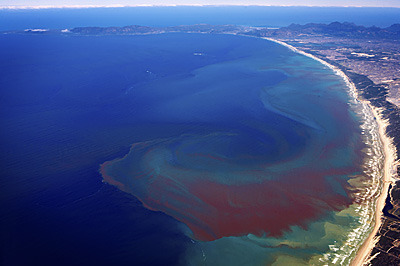 There are those who contend that red tide is one part of a bigger picture.