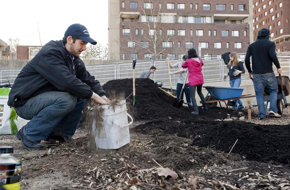 UMass students break new ground in sustainability  - Although most of the vegetables, herbs, and fruits harvested here will go directly to the dining hall's kitchen, these students have more in mind than fresh spinach and butternut squash.