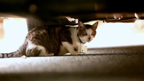 Hey folks! My boyfriends short film, CATCAM, is currently showing at Tribeca, but is also available to watch in its entirety online in a competition. It won the Jury Award for Short Docs at SXSW and is just really fuckin great. Click the pic, take two seconds to register, watch the 16 minute film, then vote for it! It's not available after today so hurry! Tell em Mamrie sent ya.**There is no place to actually say that.