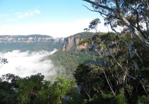 Clearing fog in the Blue Mountains National Park, Leura, Australia by Optical illusion on Flickr.