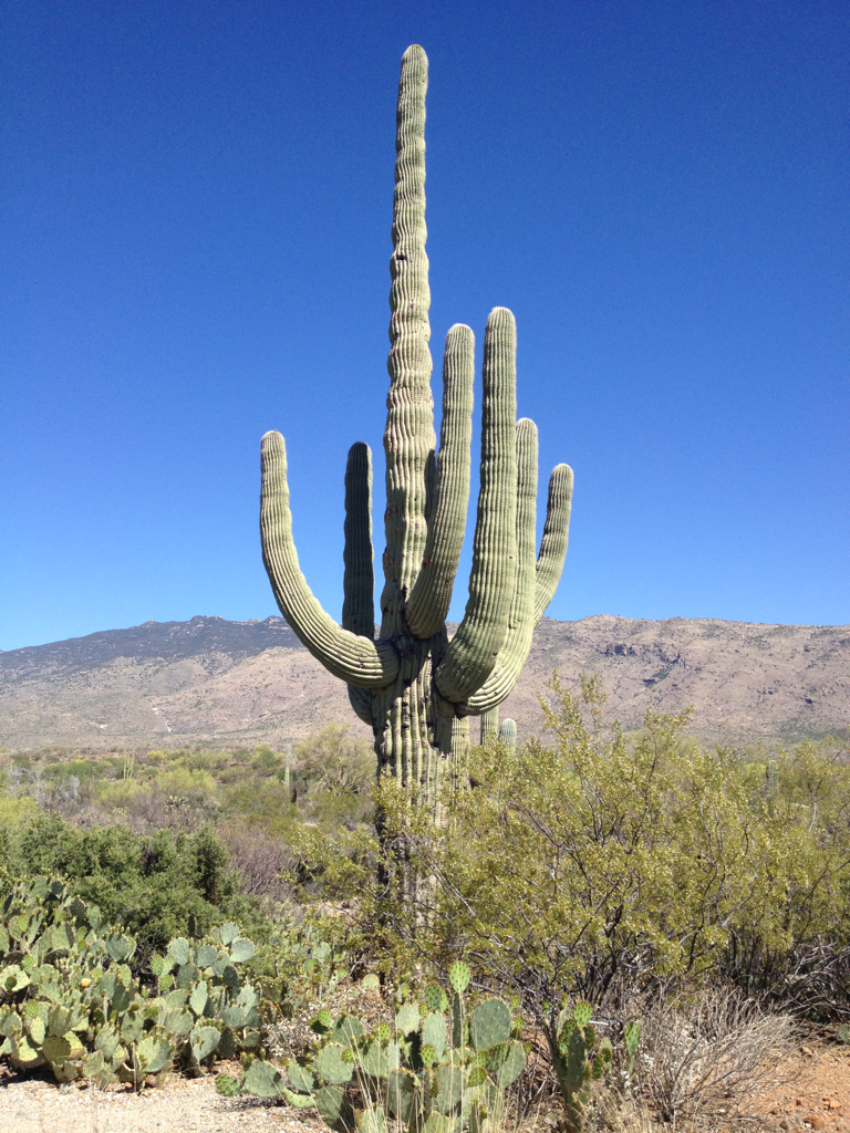 Beautiful Arizona (with a few hidden treasures that I will be sure to blog about)