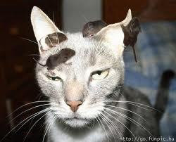 OOOk…. I have a mice's on my head …..
