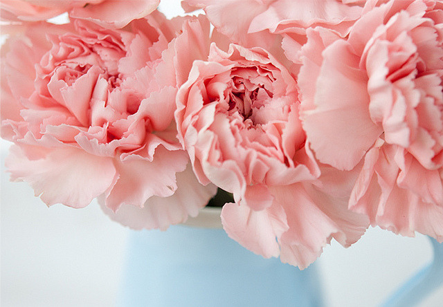 Carnations closer by 79 ideas on Flickr.