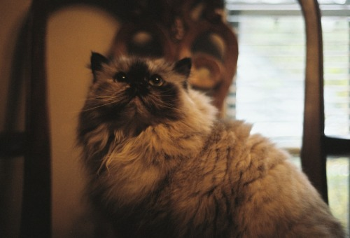 "This is a photo I took of Glynis, our family cat who died today. We got her when I was 16. I named her because I was in love with the Smashing Pumpkins' song 'Glynis' on the No Alternative compilation. When I chose the name, my mom said, ""That's such a strange name, Ashley. Why would you want to name a cat Glynis?"" I don't think I've told very many people that."