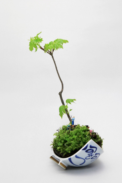 dontrblgme:  もみじ bonsai (via sunuq)