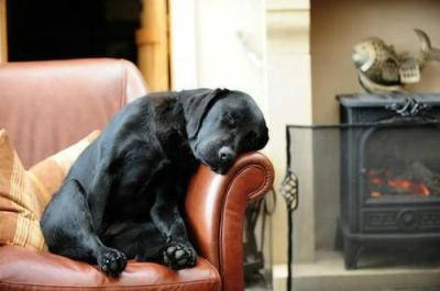 "stephaniekilbury:  Cried when I read this. ""They told me the big black Lab's name was Reggie, as I looked at him lying in his pen. The shelter was clean, no-kill, and the people really friendly. I'd only been in the area for six months, but everywhere I went in the small college town, people were welcoming and open. Everyone waves when you pass them on the street. But something was still missing as I attempted to settle in to my new life here, and I thought a dog couldn't hurt. Give me someone to talk to. And I had just seen Reggie's advertisement on the local news. The shelter said they had received numerous calls right after, but they said the people who had come down to see him just didn't look like ""Lab people,"" whatever that meant. They must've thought I did.But at first, I thought the shelter had misjudged me in giving me Reggie and his things, which consisted of a dog pad, bag of toys almost all of which were brand new tennis balls, his dishes and a sealed letter from his previous owner.See, Reggie and I didn't really hit it off when we got home. We struggled for two weeks (which is how long the shelter told me to give him to adjust to his new home). Maybe it was the fact that I was trying to adjust, too.Maybe we were too much alike.I saw the sealed envelope. I had completely forgotten about that. ""Okay, Reggie,"" I said out loud, ""let's see if your previous owner has any advice.""____________ _________ _________ _________To Whomever Gets My Dog:Well, I can't say that I'm happy you're reading this, a letter I told the shelter could only be opened by Reggie's new owner. I'm not even happy writing it. He knew something was different.So let me tell you about my Lab in the hopes that it will help you bond with him and he with you.First, he loves tennis balls. The more the merrier. Sometimes I think he's part squirrel, the way he hoards them. He usually always has two in his mouth, and he tries to get a third in there. Hasn't done it yet. Doesn'tmatter where you throw them, he'll bound after them, so be careful. Don't do it by any roads.Next, commands. Reggie knows the obvious ones —-""sit,"" ""stay,"" ""come,"" ""heel.""He knows hand signals, too: He knows ""ball"" and ""food"" and ""bone"" and ""treat"" like nobody's business.Feeding schedule: twice a day, regular store-bought stuff; the shelter has the brand.He's up on his shots. Be forewarned: Reggie hates the vet. Good luck getting him in the car. I don't know how he knows when it's time to go to the vet, but he knows.Finally, give him some time. It's only been Reggie and me for his whole life. He's gone everywhere with me, so please include him on your daily car rides if you can. He sits well in the backseat, and he doesn't bark or complain. He just loves to be around people, and me most especially.And that's why I need to share one more bit of info with you…His name's not Reggie. He's a smart dog, he'll get used to it and will respond to it, of that I have no doubt. But I just couldn't bear to give them his real name. But if someone is reading this … well it means that his new owner should know his real name. His real name is ""Tank."" Because, that is what I drive.I told the shelter that they couldn't make ""Reggie"" available for adoption until they received word from my company commander. You see, my parents are gone, I have no siblings, no one I could've left Tank with .. and it was my only real request of the Army upon my deployment to Iraq, that they make one phone call to the shelter … in the ""event"" … to tell them that Tank could be put up for adoption. Luckily, my CO is a dog-guy, too, and he knew where my platoon was headed. He said he'd do it personally. And if you're reading this, then he made good on his word.Tank has been my family for the last six years, almost as long as the Army has been my family. And now I hope and pray that you make him part of your family, too, and that he will adjust and come to love you the same way heloved me.If I have to give up Tank to keep those terrible people from coming to the US I am glad to have done so. He is my example of service and of love. I hope I honored him by my service to my country and comrades.All right, that's enough. I deploy this evening and have to drop this letter off at the shelter. Maybe I'll peek in on him and see if he finally got that third tennis ball in his mouth.Good luck with Tank. Give him a good home, and give him an extra kiss goodnight - every night - from me.Thank you,Paul Mallory____________ _________ _________ _______I folded the letter and slipped it back in the envelope. Sure, I had heard of Paul Mallory, everyone in town knew him, even new people like me. Local kid, killed in Iraq a few months ago and posthumously earning the SilverStar when he gave his life to save three buddies. Flags had been at half-mast all summer.I leaned forward in my chair and rested my elbows on my knees, staring at the dog.""Hey, Tank,"" I said quietly.The dog's head whipped up, his ears cocked and his eyes bright.""C'mere boy.""He was instantly on his feet, his nails clicking on the hardwood floor. He sat in front of me, his head tilted, searching for the name he hadn't heard in months. ""Tank,"" I whispered.His tail swished.I kept whispering his name, over and over, and each time, his ears lowered, his eyes softened, and his posture relaxed as a wave of contentment just seemed to flood him. I stroked his ears, rubbed his shoulders, buried myface into his scruff and hugged him.""It's me now, Tank, just you and me. Your old pal gave you to me."" Tank reached up and licked my cheek.""So whatdaya say we play some ball?"" His ears perked again.""Yeah? Ball? You like that? Ball?""Tank tore from my hands and disappeared into the next room. And when he came back, he had three tennis balls in his mouth."""