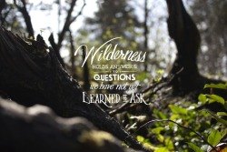 visualgraphic:  The Wilderness