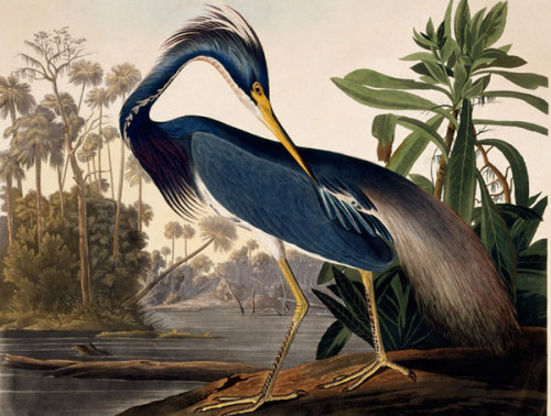 PUT A BIRD ON IT.  Happy Birthday, Mr. Audubon