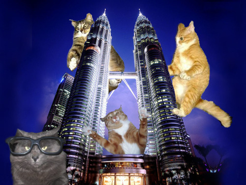 Cesar Pelli Cat is most impressed with the PET-ronas Twin Towers (or Patronas Meowers)