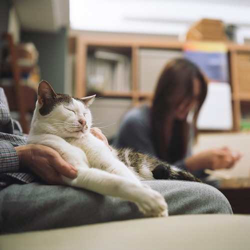catsandtheirhumans:  (via gooldays)