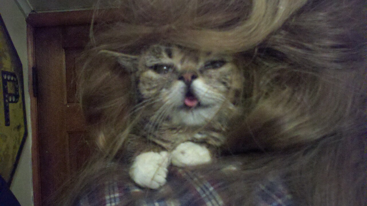 bublog:  Cool hair BUB