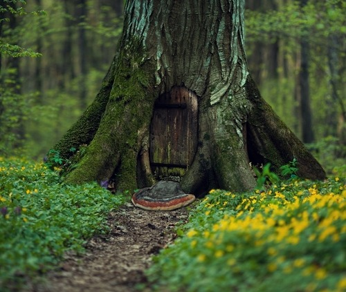 "morgondagg:  ""secret of the forest"" by Maryna Khomenko"