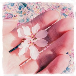 blossom in my hand, by secretsofabutterfly