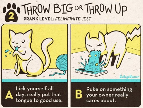 Cool Pranks for Cats [click for more]