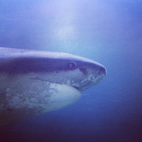 Shark.  (Taken with instagram)