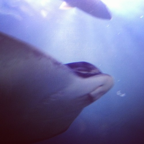 And Ray.  (Taken with instagram)