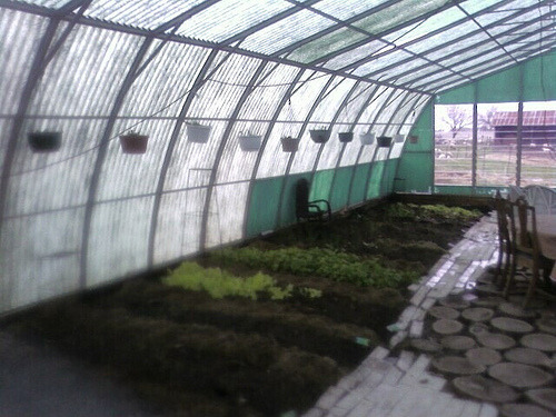 Greenhouse Garden 2012 (by aioa)