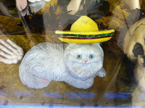 DON'T FRONT Sombrero Cat on Flickr.