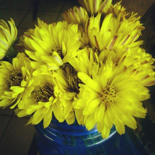 Flower/weeds, this girl I nanny for, gave me.  (Taken with instagram)