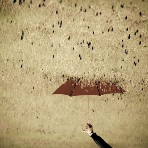 danceabletragedy:  Rain by diemelEsotericART  This is beautiful…